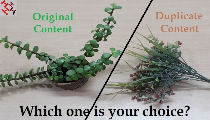 original content vs duplicate content-ThoughtfulMinds