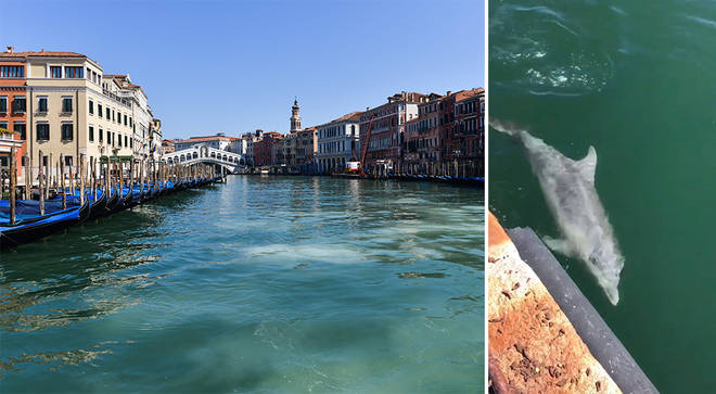 Dolphins in Italy's waterways